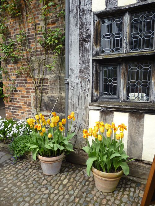 lots of lovely old roses,  vines and pots of flowers