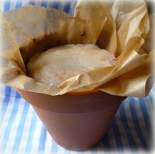 plant pot cake