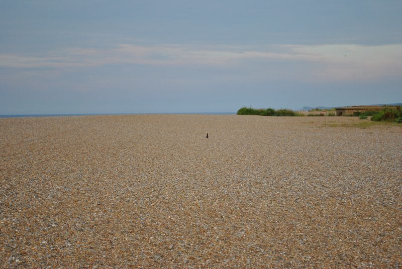 swallow over Cley beach