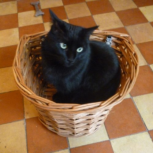 Frank in bike basket