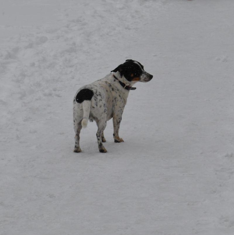 Jasper, I see him most days. He loves snow!