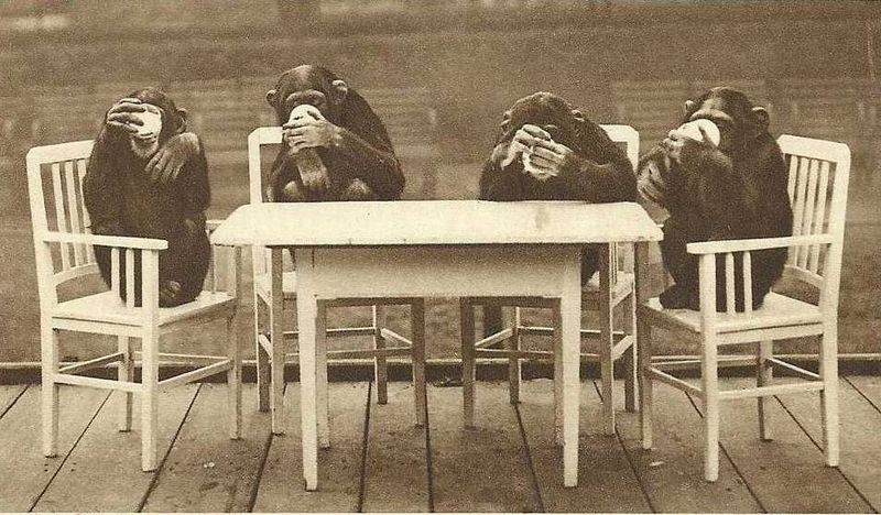 Chimps' tea party